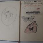 Document: Nabokov's Notes