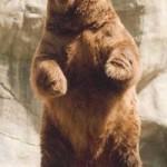 Ladies, Gentlemen, and Bears: We Have a Winner!