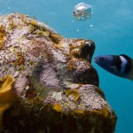 What We're Loving: Underwater Art, Analytic Philosophy, Betsy-Tacy