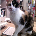 In Praise of Bookstore Cats
