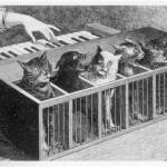 What We're Loving: Porto Pim, Montana, Cat Pianos