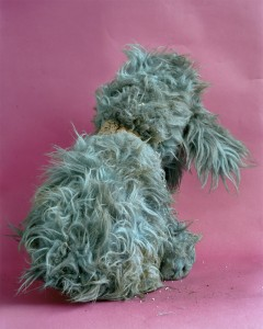 Stuffed Toy Poodle, 2007.