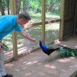 Flannery O'Connor's Peacocks, and Other News