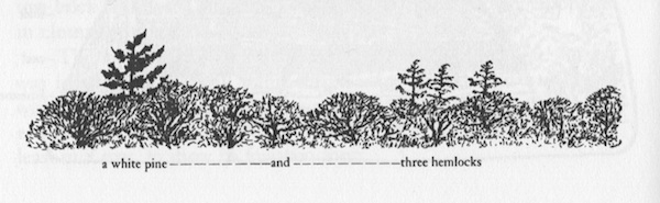 "Illustration from ""Reading the Headlines Only"" Reading the Landscape of America (Nature Study Guild Publishers) by May Theilgaard Watts.  Many of the illustrations to this essay feature a variation on this blunted trapezoid, representing  the boundaries of her passenger-side window."