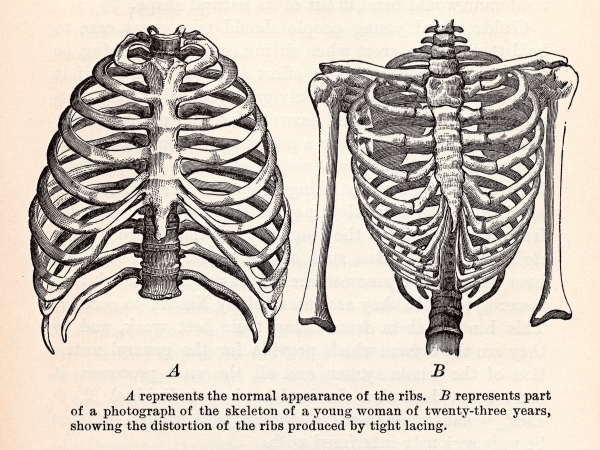 antique_anatomy_illustration__human_ribcages_circa_1911_sjpg3245