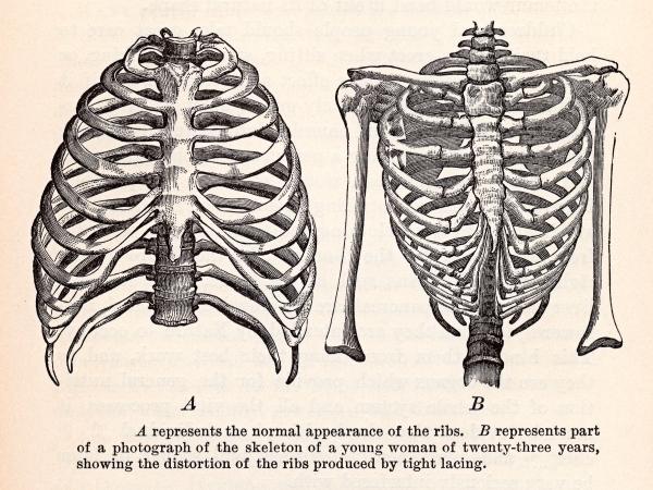 antique_anatomy_illustration__human_ribcages_circa_1911_sjpg3245
