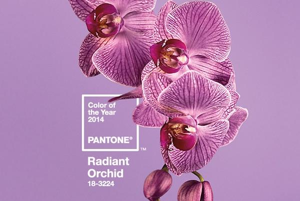 orchidpurple