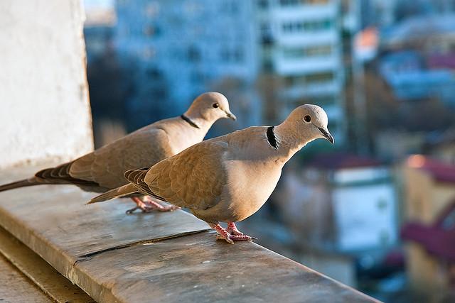 balcony with birds horia varlan