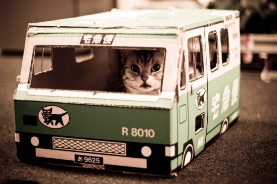cat-driving-bus