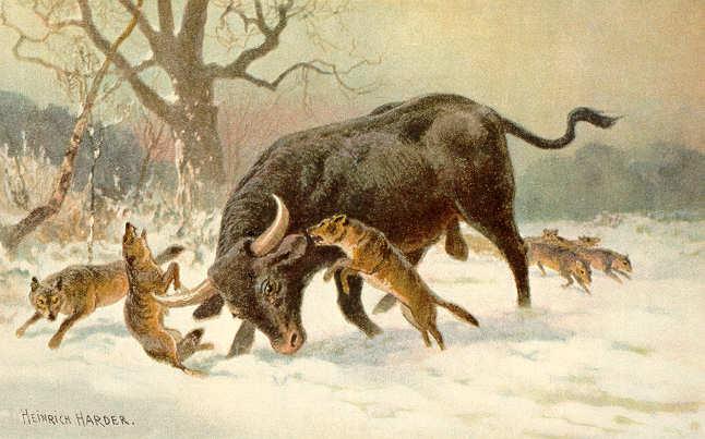 Long_horned_european_wild_ox