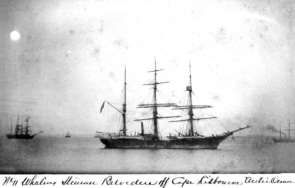 belvedere-whaler