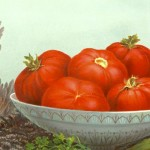 Our Nation's Poets Wallow in Tomatoes, and Other News
