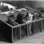 Tickle the Feline Ivories, and Other News