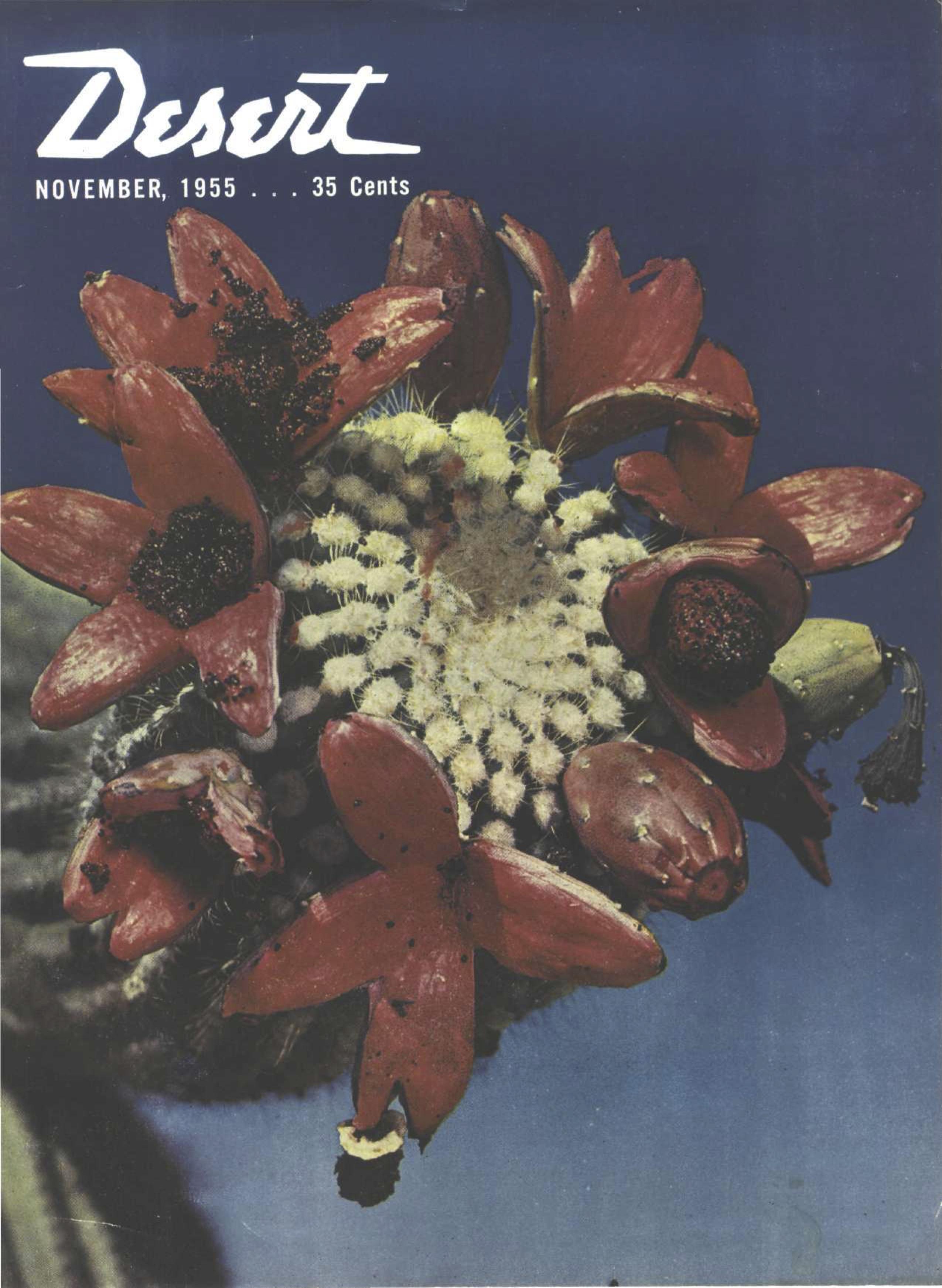 Desert-Magazine-1955-11