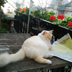 #ReadEverywhere: The Cats Edition