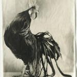 Poultry Suite