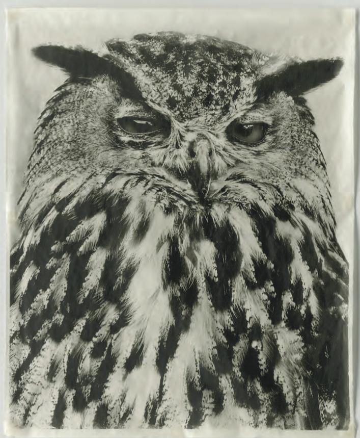 Pagliuso_Owl V, 2009