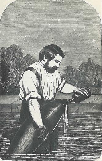 Buckland reviving a porpoise, 1862. Originally included in third volume of Buckland's Curiosities of Natural History.