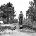 Flannery's Farm