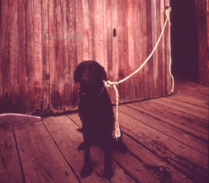 dogdock