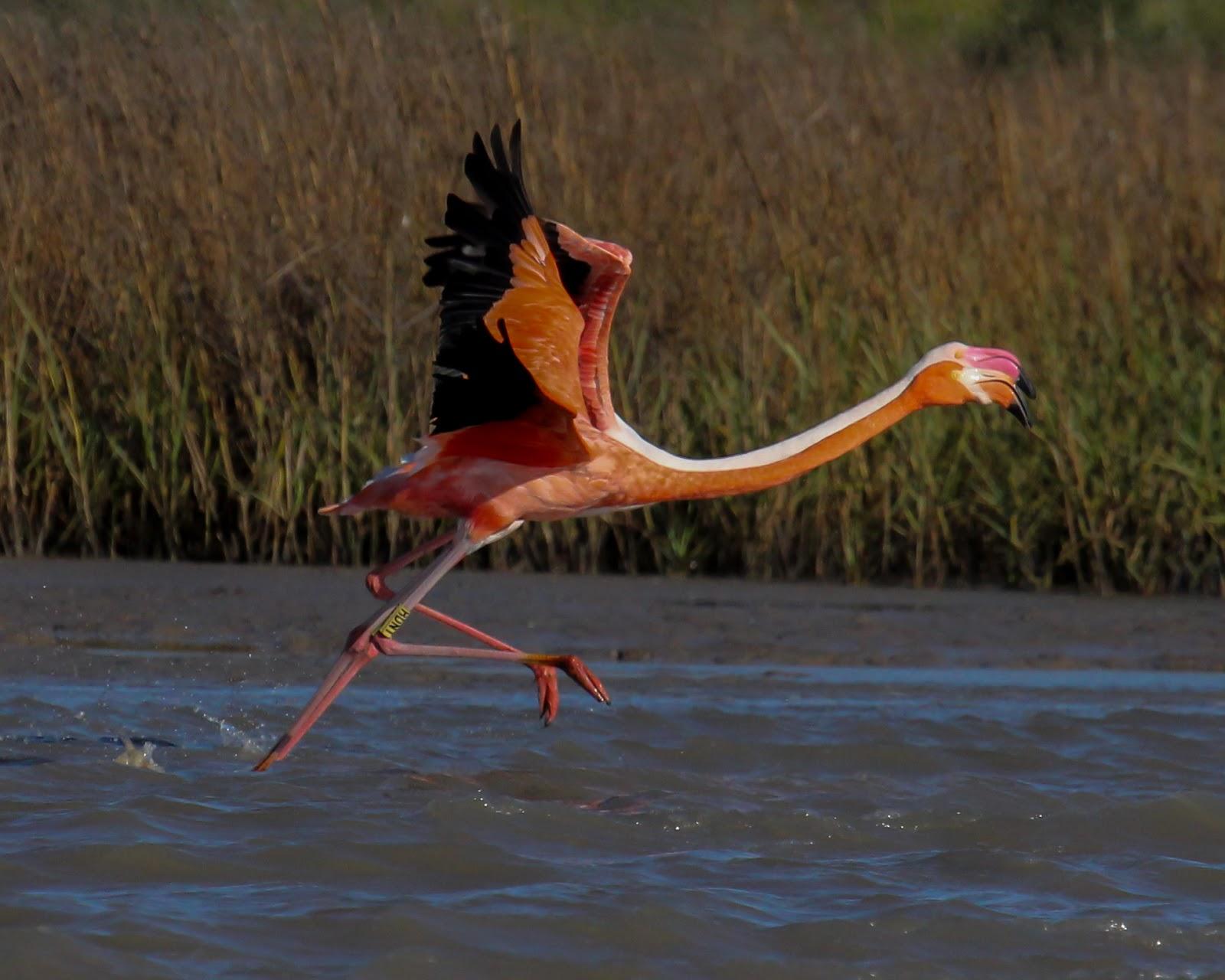 pink flamingo essays