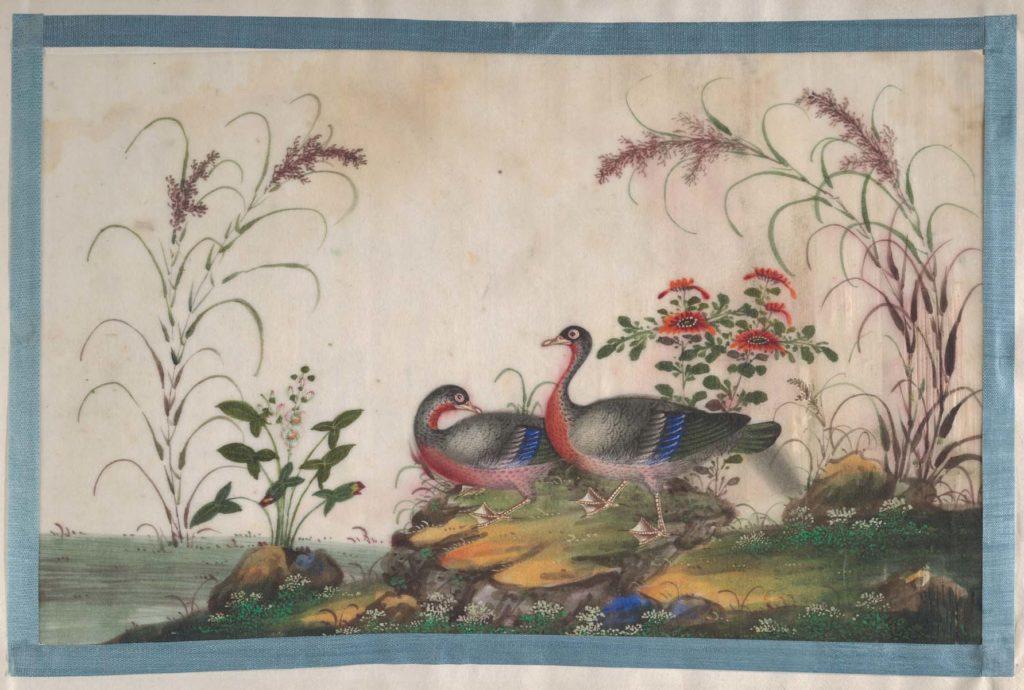 Meditation on Birding
