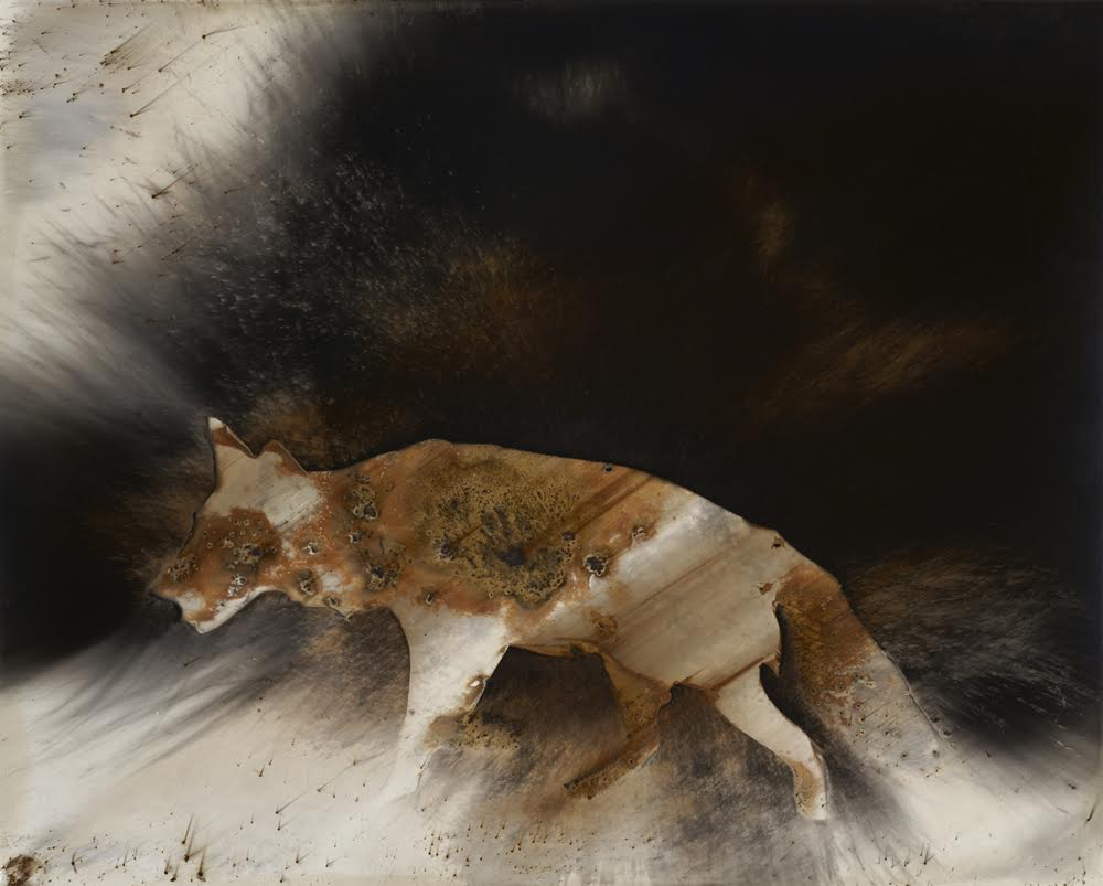 Chances with Wolves and the Lonesome Labor of Living